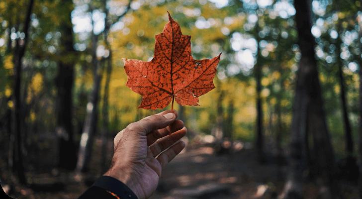 הניוזלטר של חבר תרגומים – אוקטובר 2019